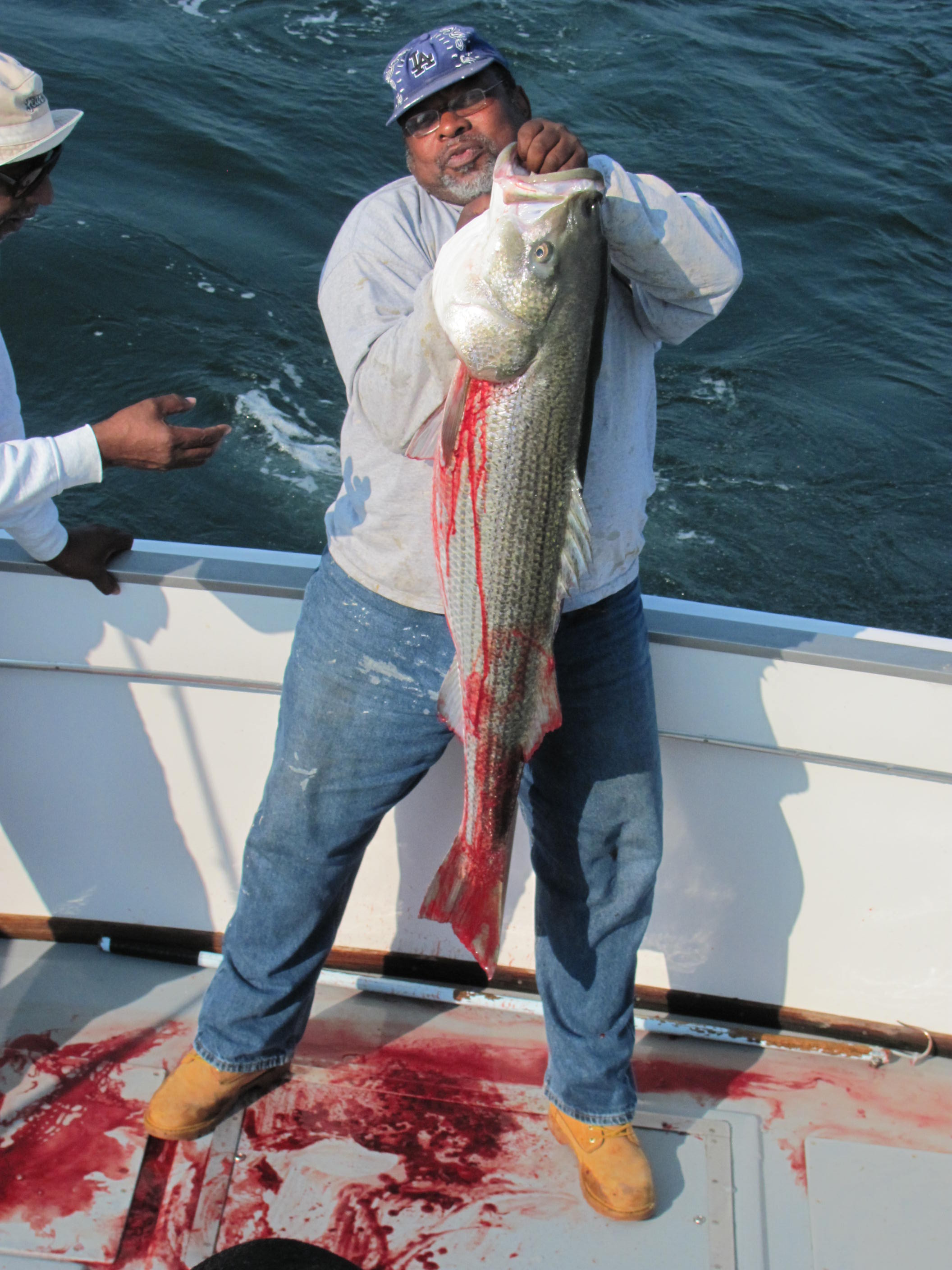 This 51 pound bass was caught aboard the Misty charter fishing boat fishing our of Galilee RI